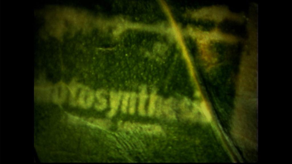 Photosynthesis Still6